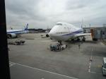 日向雪兎さんが、成田国際空港で撮影した全日空 747-481の航空フォト(写真)