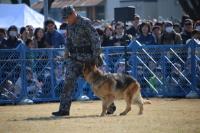 イベント画像 13枚目:警備犬の訓練展示、2019年3月のオープンベース