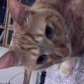 seacat2012さんのプロフィール画像