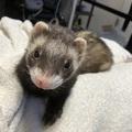 *Hawaiian Pooh*さんのプロフィール画像