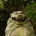 shingenさんのプロフィール画像