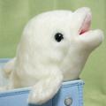 shiro-irukaさんのプロフィール画像