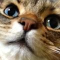 虎太郎19さんのプロフィール画像