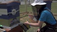 ニュース画像:デルタ航空、環境保全でアトランタ本社にミツバチの巣箱を設置