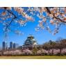 ニュース画像 2枚目:大阪城