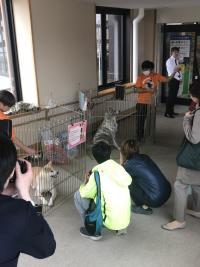 ニュース画像:秋田空港、10月から3月まで毎月秋田犬が来港 10月は17日