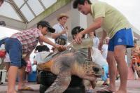 ニュース画像:神戸空港、11月にウミガメ・エコツーリズムを開催