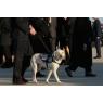 ニュース画像 3枚目:介助犬のサリーもVC-25Aに搭乗