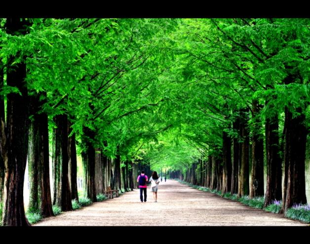 ニュース画像 1枚目:潭陽 メタセコイア並木道