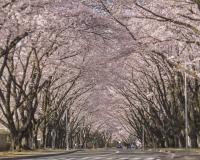 ニュース画像:桜の開花で各施設が開放 週間イベント情報