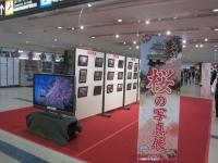 ニュース画像:長崎空港、4月8日まで「おおむら SAKURA写真展」開催
