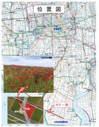 ニュース画像:佐賀空港沿いのポピー、5月下旬まで見ごろに