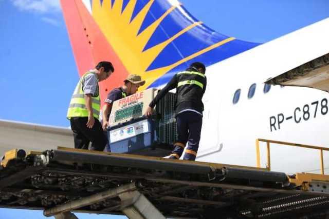 ニュース画像 1枚目:フィリピンワシ輸送の様子