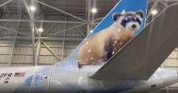 ニュース画像:フロンティア航空、絶滅危惧種のクロアシイタチ描くA320neo受領