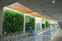 ニュース画像:セントレア、「第18回 屋上・壁面緑化技術コンクール」で奨励賞を受賞