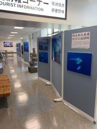 ニュース画像:奄美空港で「興克樹写真展 魅惑の座頭鯨」、2月中旬まで開催