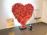 ニュース画像:旭川空港、3月14日まで花の装飾を展示 記念撮影でチョコプレゼント