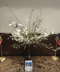 ニュース画像:JAL、青森県とコラボし羽田と伊丹のラウンジで「弘前公園の桜」を展示