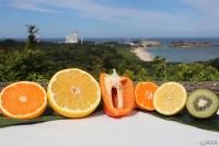 ニュース画像:「こうのとり」9号機、国際宇宙ステーションに野菜やフルーツを輸送