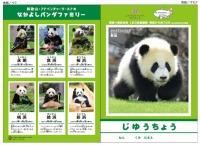 ニュース画像:JAL、パンダ自由帳プレゼント 南紀白浜線をPR