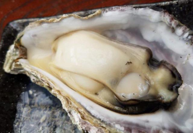 ニュース画像 1枚目:石川・七尾市で採れる牡蠣イメージ
