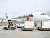 チャンギ空港、ワクチン輸送に向けた準備整うの画像