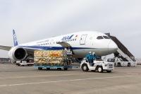 ニュース画像:ANA、DHLと連携 ファイザー製ワクチン輸送で