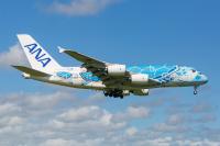 ニュース画像:FLYING HONU、4月は成田・関空・セントレアで遊覧フライト