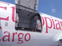 ニュース画像:NHK「国際報道2021」、コロナ禍のエチオピア航空の輸送体制を特集
