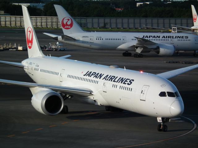 ニュース画像 1枚目:JAL 787-9 イメージ (もっちゃこさん撮影)