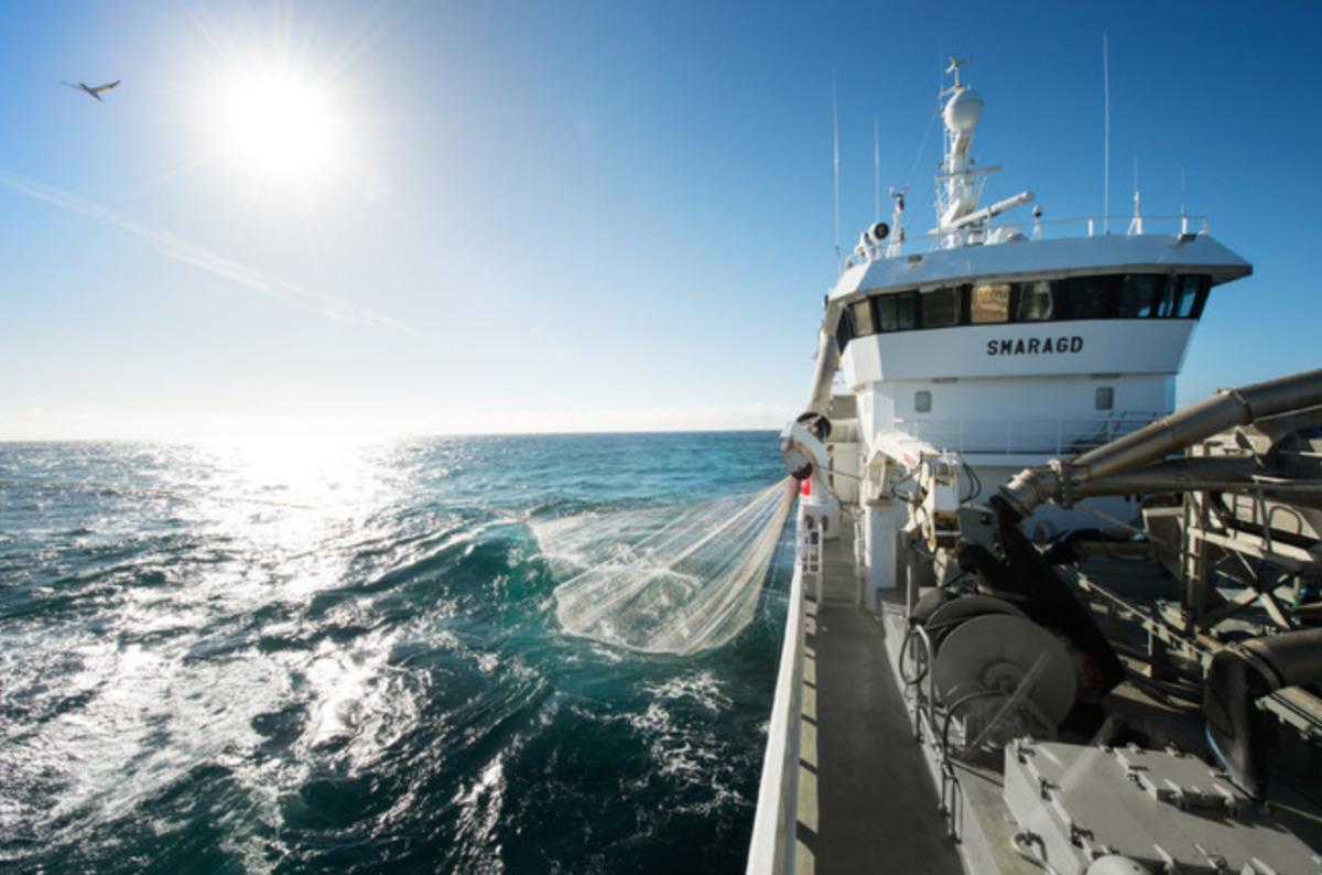 ニュース画像 1枚目:ノルウェーでのサバ漁の様子