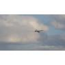 ニュース画像 2枚目:千歳基地にアプローチするVMFA(AW)-224隊長機