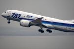 AkiChup0nさんが、羽田空港で撮影した全日空 787-8 Dreamlinerの航空フォト(写真)