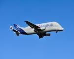 じーく。さんが、トゥールーズ・ブラニャック空港で撮影したエアバス・トランスポート・インターナショナル A300B4-608STの航空フォト(飛行機 写真・画像)