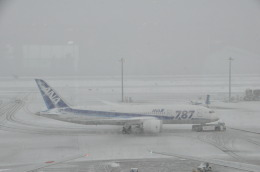 Butaさんが、羽田空港で撮影した全日空 787-8 Dreamlinerの航空フォト(飛行機 写真・画像)