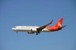 ムッシュさんが、成田国際空港で撮影した深圳航空 737-87Lの航空フォト(飛行機 写真・画像)