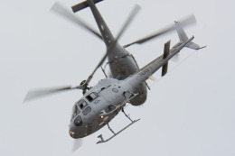 santaさんが、ウィリアムズ空軍基地で撮影したオーストラリア海軍 AS350 Ecureuilの航空フォト(飛行機 写真・画像)