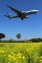 jinopekoさんが、福岡空港で撮影した全日空 777-281/ERの航空フォト(写真)