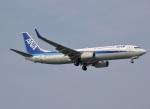 えるあ~るさんが、那覇空港で撮影した全日空 737-881の航空フォト(写真)