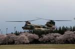 eagletさんが、熊谷基地で撮影した航空自衛隊 CH-47J/LRの航空フォト(写真)