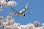 furuさんが、成田国際空港で撮影した日本航空 787-8 Dreamlinerの航空フォト(写真)
