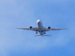 フェアリー・ロートダインさんが、東京ヘリポートで撮影した全日空 787-8 Dreamlinerの航空フォト(写真)
