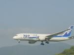 わたくんさんが、福岡空港で撮影した全日空 787-8 Dreamlinerの航空フォト(写真)