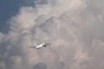 アイスコーヒーさんが、羽田空港で撮影した日本航空 777-246の航空フォト(飛行機 写真・画像)