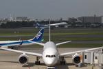 T.Sazenさんが、伊丹空港で撮影したボーイング 787-8 Dreamlinerの航空フォト(飛行機 写真・画像)