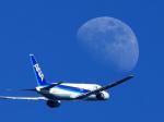 羽田で撮影された全日空 - All Nippon Airways [NH/ANA]の航空機写真