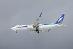 tupolevさんが、紋別空港で撮影した全日空 737-881の航空フォト(写真)