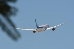 小弦さんが、ノーマン・Y・ミネタ・サンノゼ国際空港で撮影した全日空 787-8 Dreamlinerの航空フォト(飛行機 写真・画像)