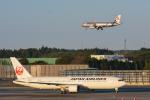 パンダさんが、成田国際空港で撮影した日本航空 767-346/ERの航空フォト(写真)