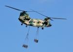 じーく。さんが、入間飛行場で撮影した航空自衛隊 CH-47J/LRの航空フォト(写真)
